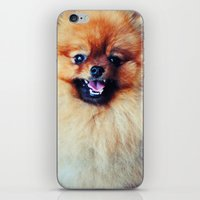 pomeranian iPhone & iPod Skins featuring POMERANIAN PHOTOGRAPH by Allyson Johnson