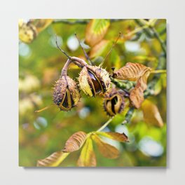 CHESTNUT AUTUMNLIGHT Metal Print