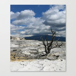 Minerva Spring and Terrace Canvas Print