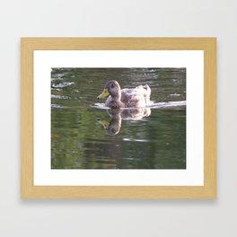 Duck in Beck Kiwanis Park Framed Art Print