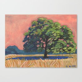 Texas Live Oak Canvas Print