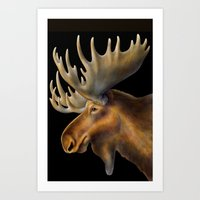 moose Art Prints featuring Moose by Tim Jeffs Art