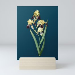 Vintage Elder Scented Iris Botanical Illustration on Teal Mini Art Print