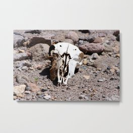 Dome Skull Metal Print