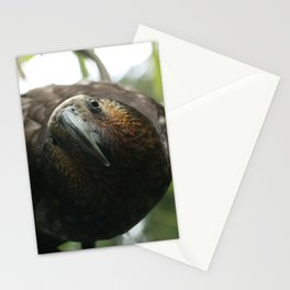 Kaka : New Zealand Endemic Stationery Cards