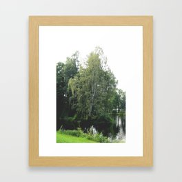 Large white birch on the shore of a reservoir with a dangling leaf crone Framed Art Print