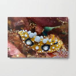 Summer nudibranch Metal Print