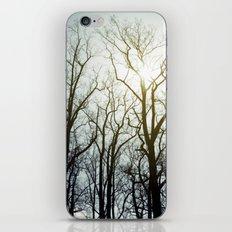 treeline* iPhone & iPod Skin
