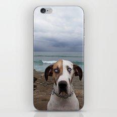 Great Dane iPhone & iPod Skin