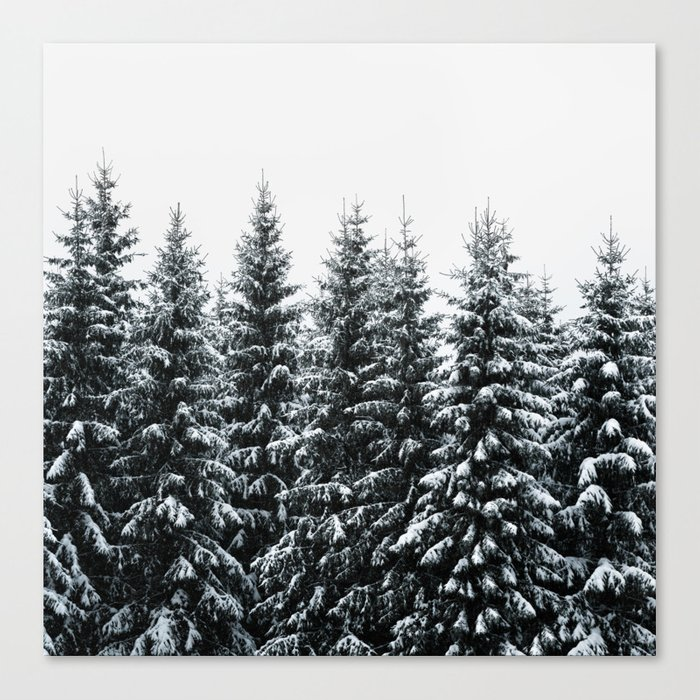 The White Bunch Canvas Print