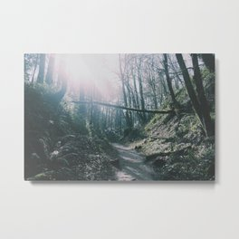 Forest Park Metal Print