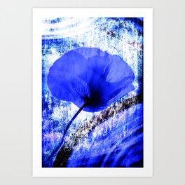 Blue Poppy vintage 222 Art Print