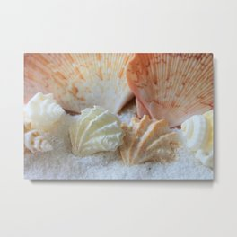 Seashells 2 Metal Print