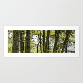 Canal Through the Trees Art Print
