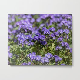 Purple Wildflowers Anza Borrego Metal Print