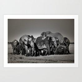 Elephant Herd Circling Art Print