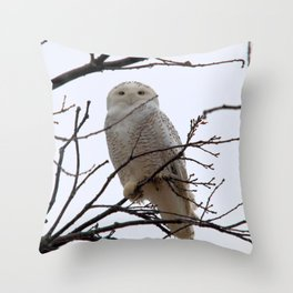 Snowy Owl in the Treetop Throw Pillow