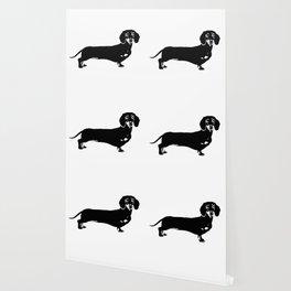 Dachhund Dog Wallpaper