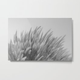 Foxtails on a Hill in Black and White Metal Print