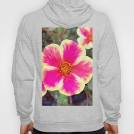 Hot Pink and Pale Yellow Portulaca Flower Digital Photography Hoody