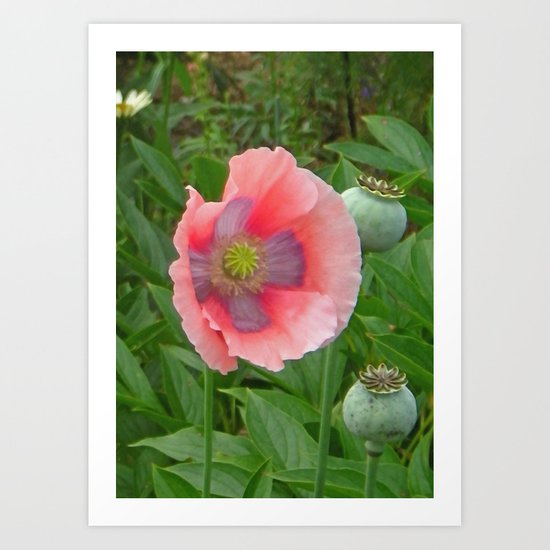 The Last Poppy Art Print