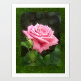 Pink Roses in Anzures 3 Blank P1F0 Art Print