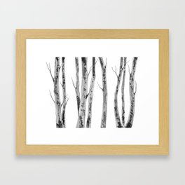 Birch Trees | Indian Ink Illustration | Canadian Art Framed Art Print