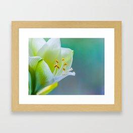 White Flower Against Teal Turquoise Background Framed Art Print