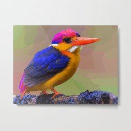 Oriental Dwarf Kingfisher Metal Print
