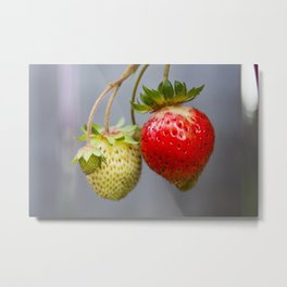 Waiting for redness.  Metal Print
