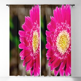Garvinea Sweet Fiesta Gerber Daisy Blackout Curtain