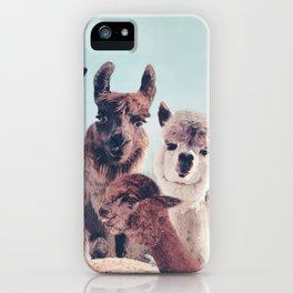 ALPACA ALPACA ALPACA iPhone Case