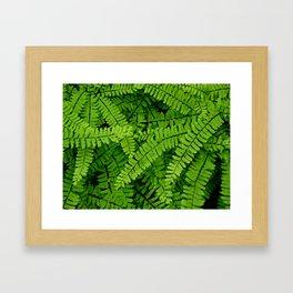 Maidenhair Fern (Adiantum pedatum) Framed Art Print