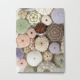 Urchin A Plenty... Metal Print