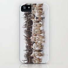 Snowy Sheep Stare Slim Case iPhone (5, 5s)