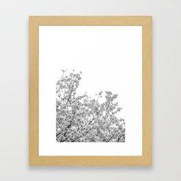 Cherry Blossoms (Black and White) Framed Art Print