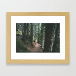 Mckenzie River Trail Framed Art Print