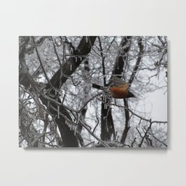 Robin After Icestorm Metal Print