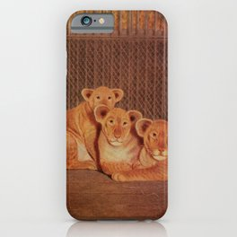 Vintage Print - Birds and Nature (1906) - African Lions iPhone Case