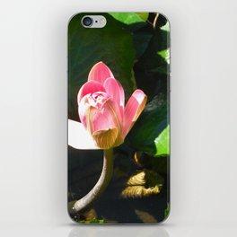 Hanalei Lotus, by Mandy Ramsey, Haines, AK iPhone Skin