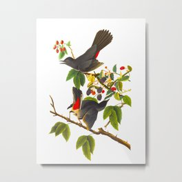 Catbird Vintage Illustration Metal Print