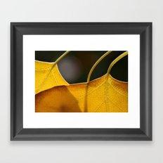 Autumn Veins  Framed Art Print