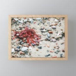 Colorful Stones and red Algas Framed Mini Art Print
