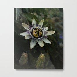 Passiflora incarnata Metal Print