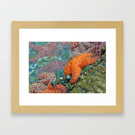 Summer Starfish Framed Art Print