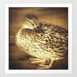Toned Mallard Duck  Art Print