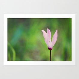 Pink Cyclamen Art Print