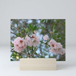 Spring - Cherry blossom Mini Art Print