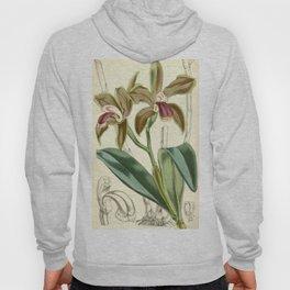 Cattleya bicolor Curtis 82 4909 (1856) Hoody
