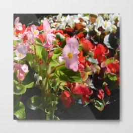 Bouquet of Begonias.... Metal Print
